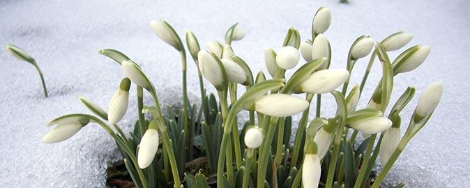 cuidar-un-jardin-en-invierno